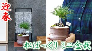 松ぼっくりミニ盆栽