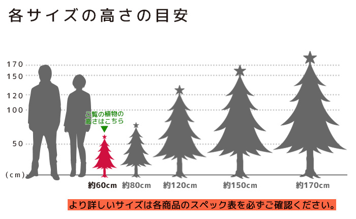 もみの木 高さの目安(60cm)