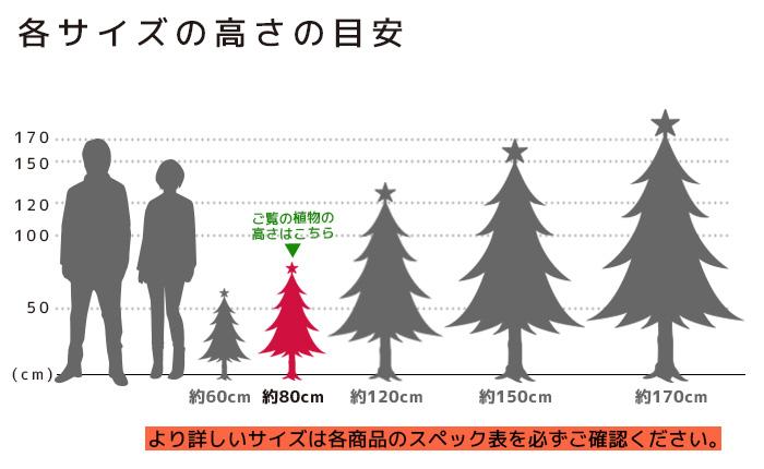 もみの木 高さの目安(80cm)