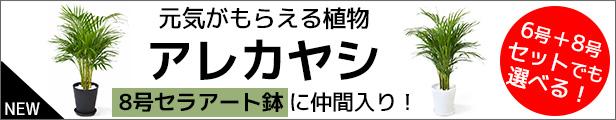 アレカヤシ セラアート8号鉢