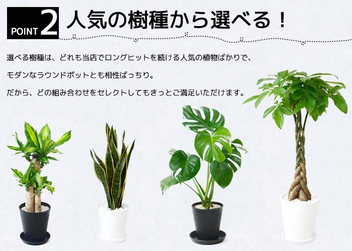 人気の樹種から選べる!
