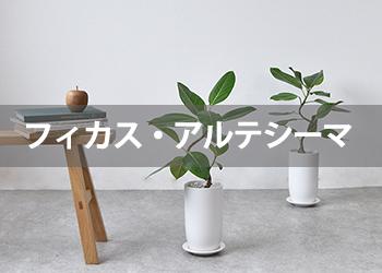 /link_st080041.jpg