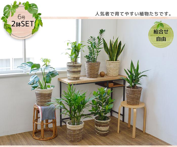 育てやすい植物です