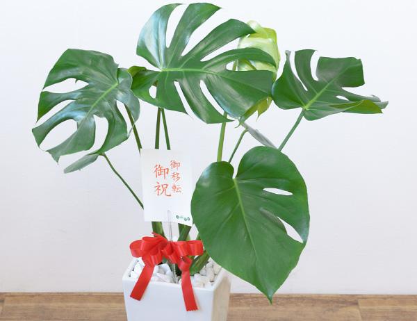 観葉植物 販売 通販