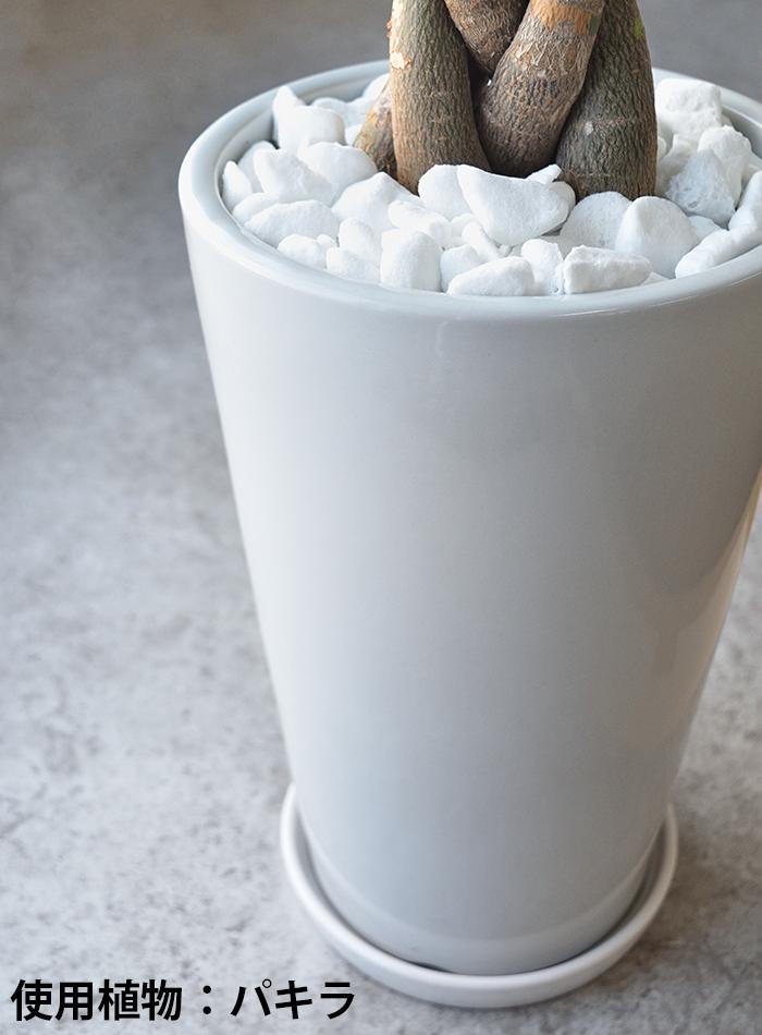 観葉植物 ポトス ヘゴ仕立て ラウンド白陶器