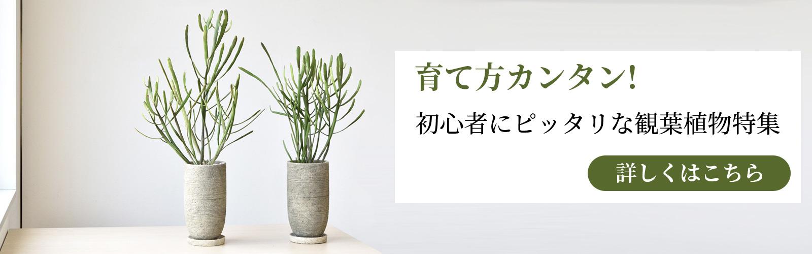 top_03_07.jpg