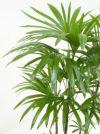 シュロチク(棕櫚竹) 黒陶器 RA150015