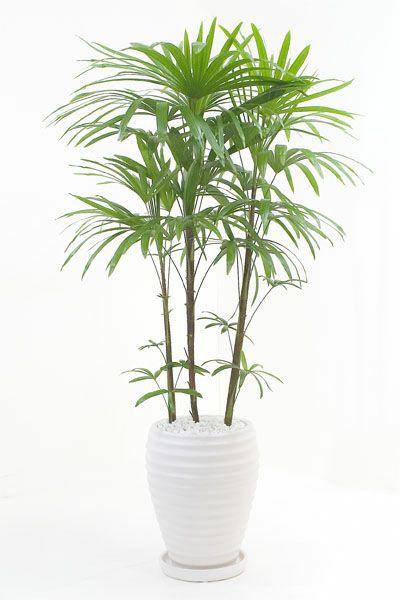 シュロチク(棕櫚竹) 白陶器 RA150019