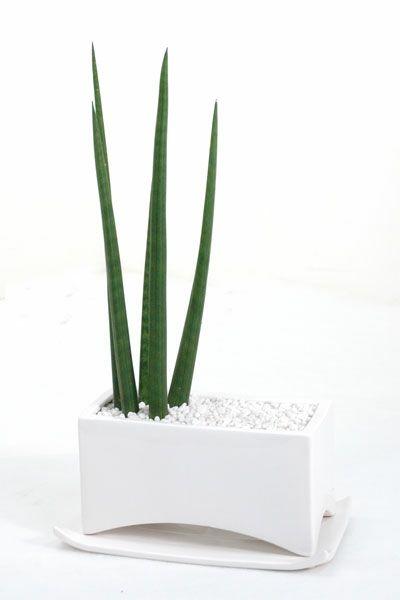 観葉植物 通販 サンセベリア・スタッキー 選べる3色 陶器ポット入り ST050008
