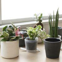 8種類から選べる ミニ観葉植物 白陶器のボールポットとロングポット