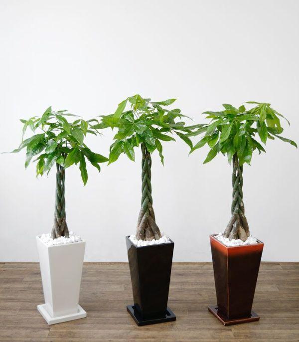 パキラ  選べる3色・スクエア陶器  ST150024