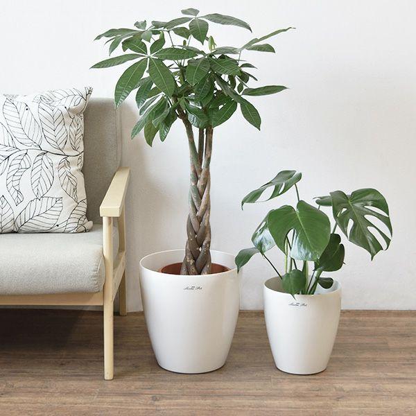 ツートーン 鉢カバー付き 2鉢セット 大きさ違いの植物 お得なセット♪  選べる2サイズ、まとめ買い! 8号+6号鉢植物