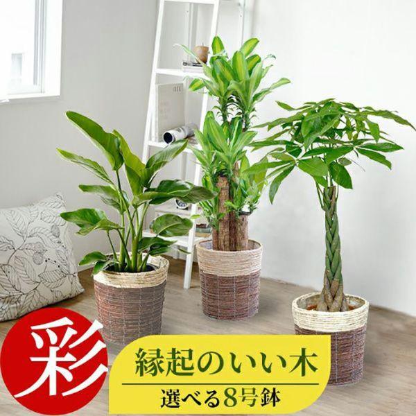 観葉植物 通販 選べる8号鉢カバーセットKM080006