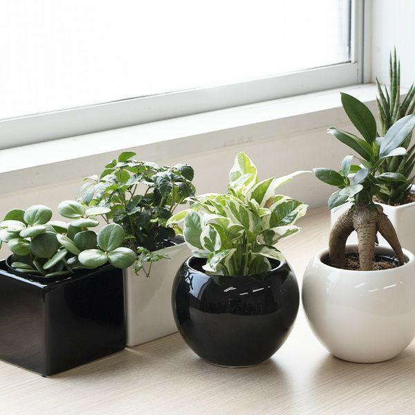 選べる 卓上ミニ観葉植物丸型ポット 角型ポット ブラック ホワイト