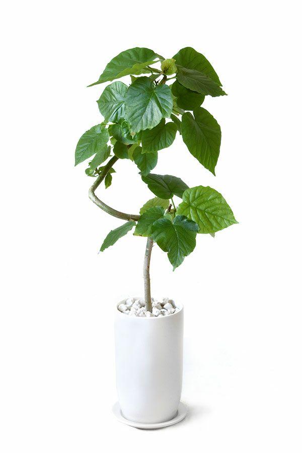 観葉植物 通販